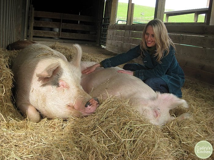 Cadry with pigs at Farm Sanctuary in Northern California.