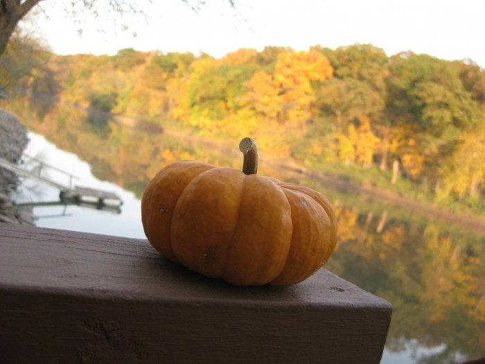 Miniature pumpkin sitting on ledge by river, fall trees in background.