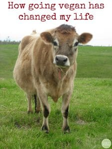 """Mario the steer at Farm Sanctuary in California + text """"How going vegan has changed my life."""""""