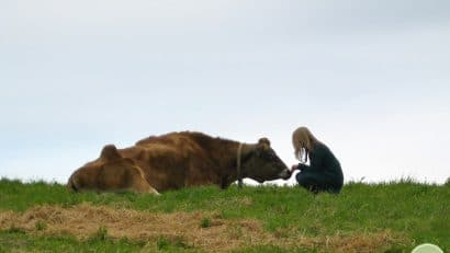 Cadry with cow at Farm Sanctuary in California.