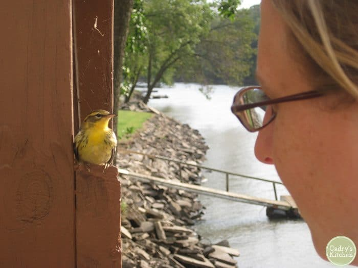 Cadry looking at tiny yellow bird on deck by river.
