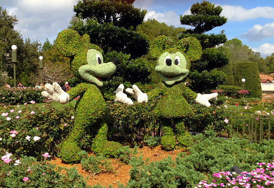 mickey & mickey greenery