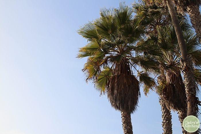 Palm tree against blue sky.