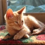 Meet Avon (Warning: Kitten Overload)