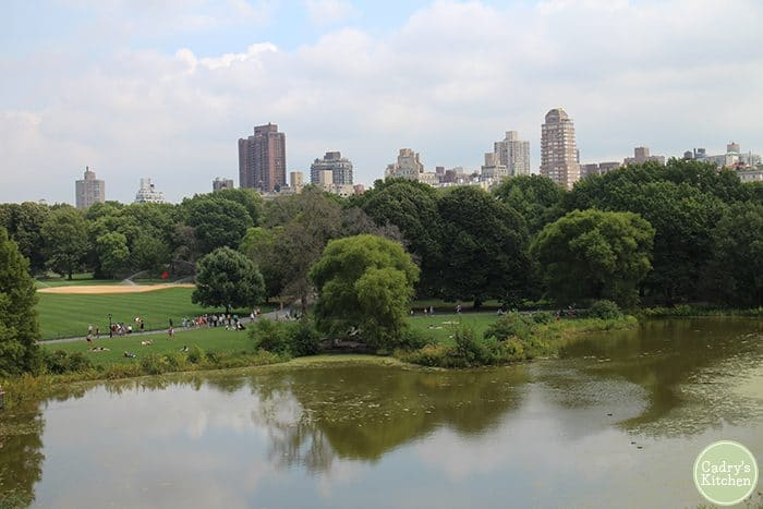 Central Park with pond, grass, and buildings.