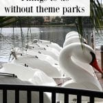 Text: Orlando travel: Things to do without theme parks. Swan paddle boats on Lake Eola.