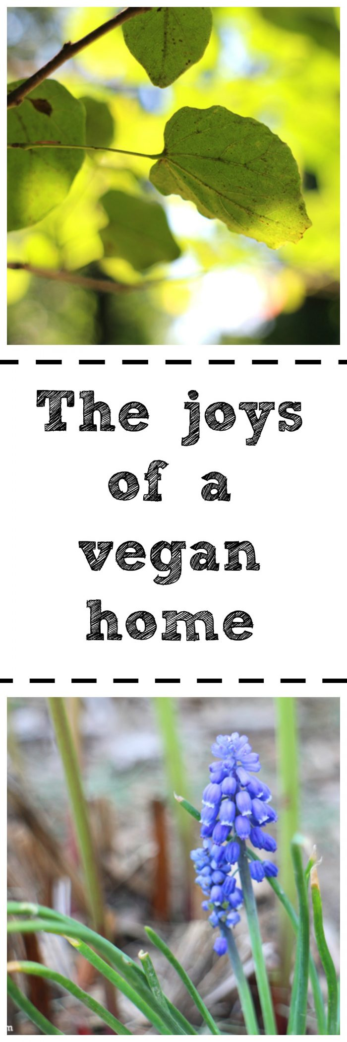 The joys of keeping a vegan home: Making boundaries, having guests, and where to draw the line | cadryskitchen.com