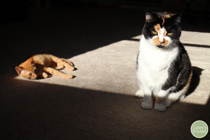 Jezebel glowering at the camera while Avon looks at her in the sunlight.