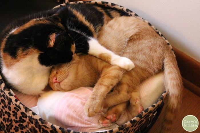 Jezebel and Avon cuddling in a suitcase when Avon was a kitten.