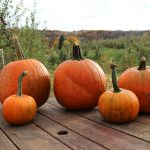 A Day at the Pumpkin Patch + Appetizers for Halloween