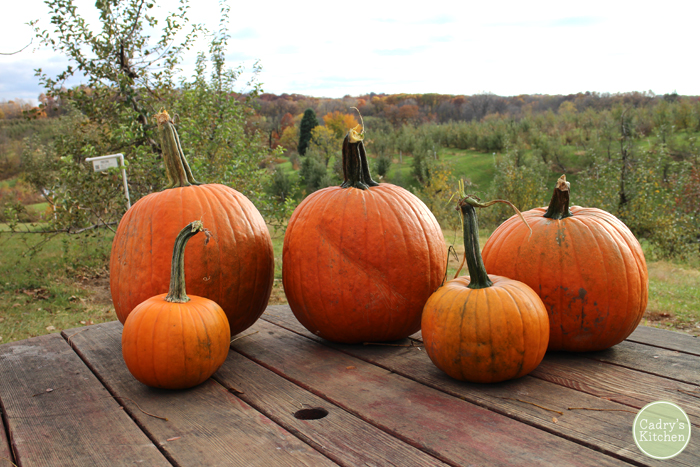 Pumpkins on table in front of apple orchard.