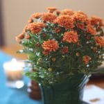 40 Vegan Thanksgiving Recipes & More