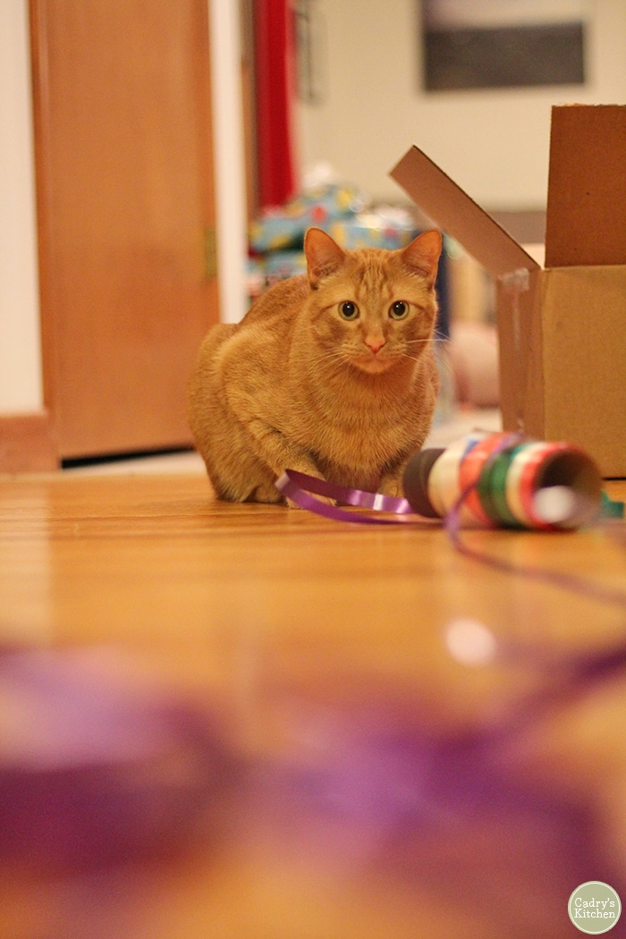 Avon the cat with spool of ribbon while he wraps vegan gifts.