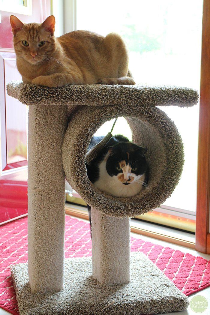 The kitties like their new cat furniture | cadryskitchen.com