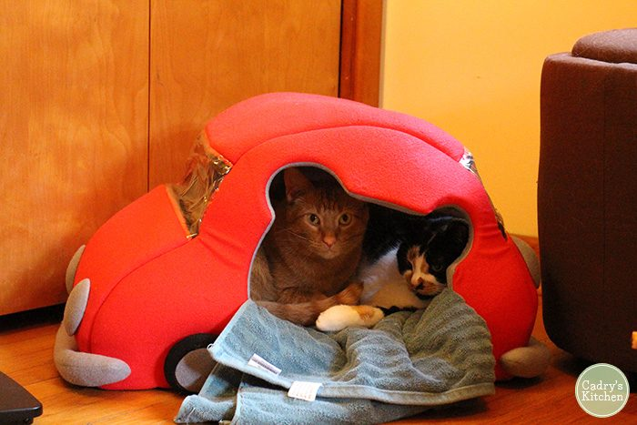 Avon and Jezebel together in a cat car bed.