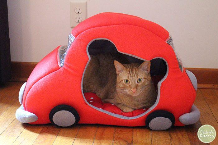 Avon sitting in car bed.
