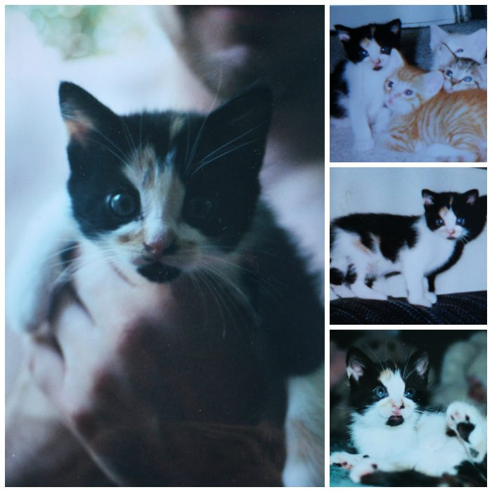 Collage of Jezebel as a kitten.