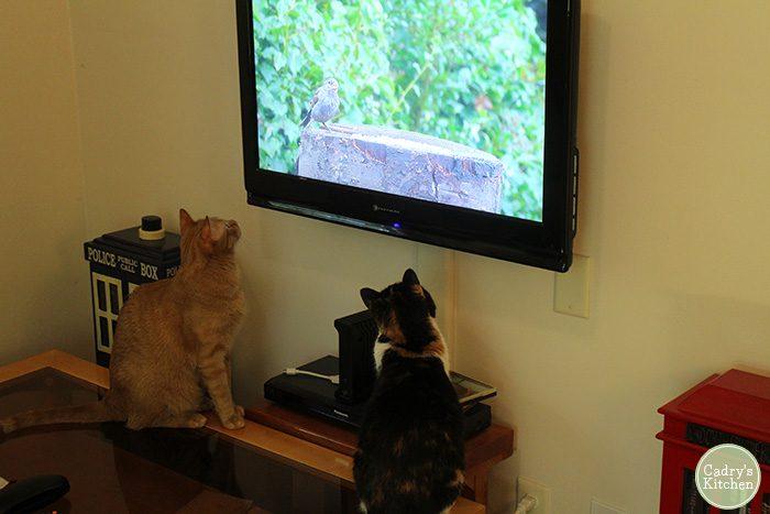 Avon & Jezebel, the cats, watching bird on TV.