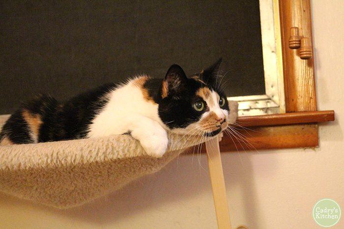 Jezebel in cat hammock, mesmerized by bird on TV.