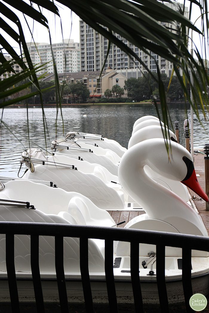 Swan paddle boats at Lake Eola.