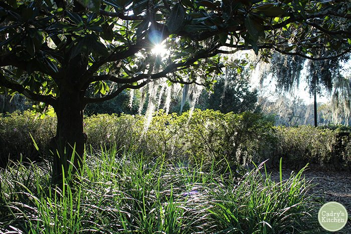 Sunlight through trees at Leu Gardens.