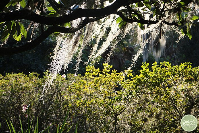 Trees in the sunlight at Leu Gardens.