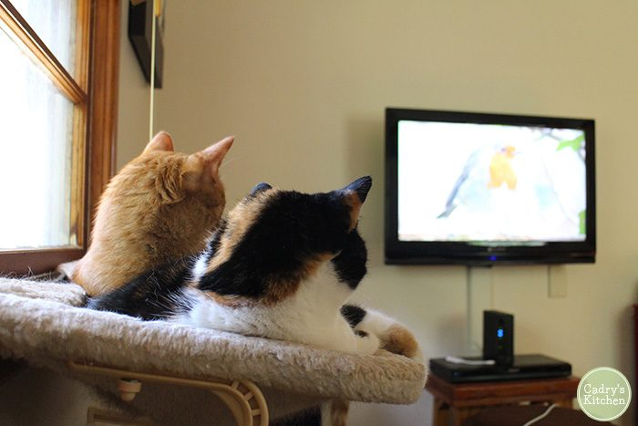 Videos for Cats: Tales from Cat TV - Cadry's Kitchen