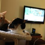 Videos for Cats: Tales from Cat TV