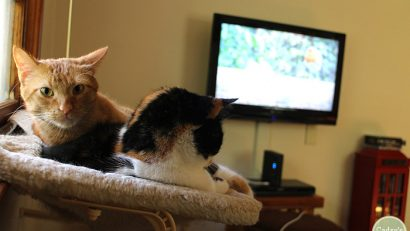 Add interest to your cat's day by playing videos for cats   cadryskitchen.com