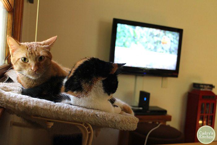 Avon and Jezebel in cat hammock watching TV.