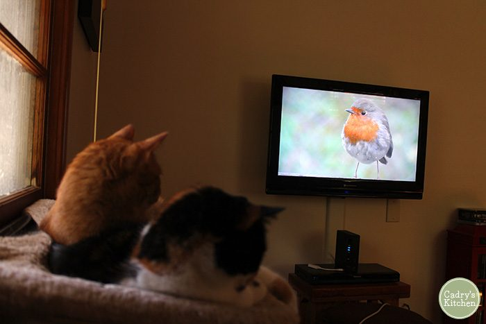Avon and Jezbel sit in cat hammock watching bird on television.