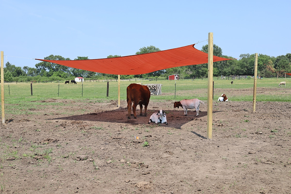 Animals resting under a red awning.