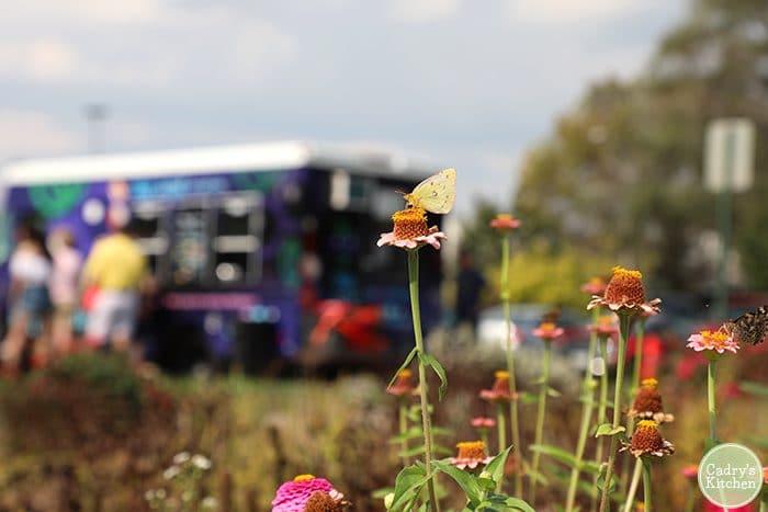 Butterfly on flower at Iowa VegFest.