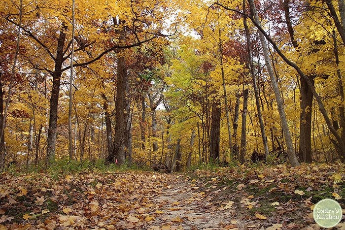 Yellow leaves on trees and path.