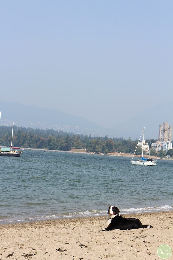 Dog lounging on Kitsilano Beach.