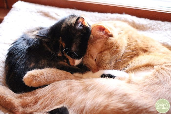 Avon and Cally cuddling on a hammock.