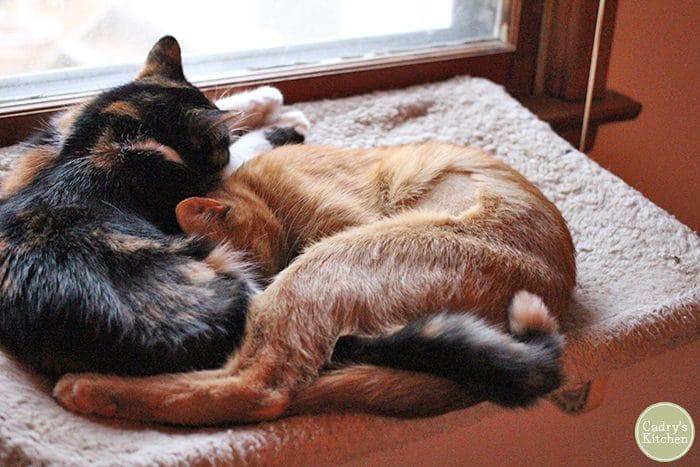 Avon & Cally cuddling in the hammock.