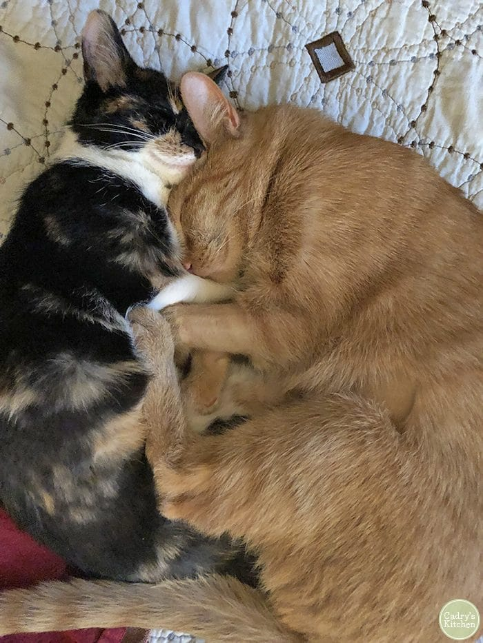 Avon and Cally cuddling in bed.