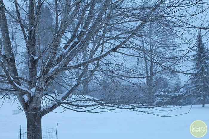 Bare trees in a snowy yard during Polar Vortex.
