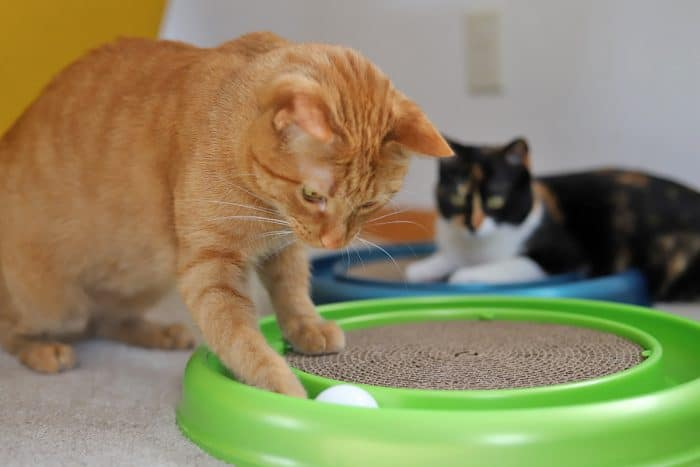 Avon and Cally playing with track ball.