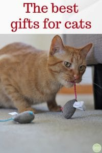 Text overlay: The best gifts for cats. Cat holding a toy mouse in his mouth.