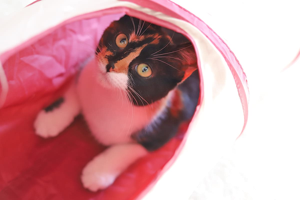 Cally in cat tunnel.