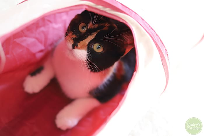 Cally playing in tunnel.