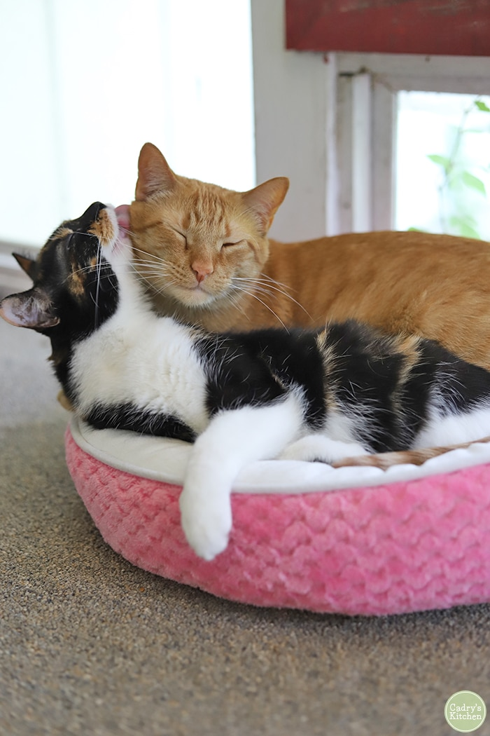 Cally and Avon grooming each other in pink cat bed.