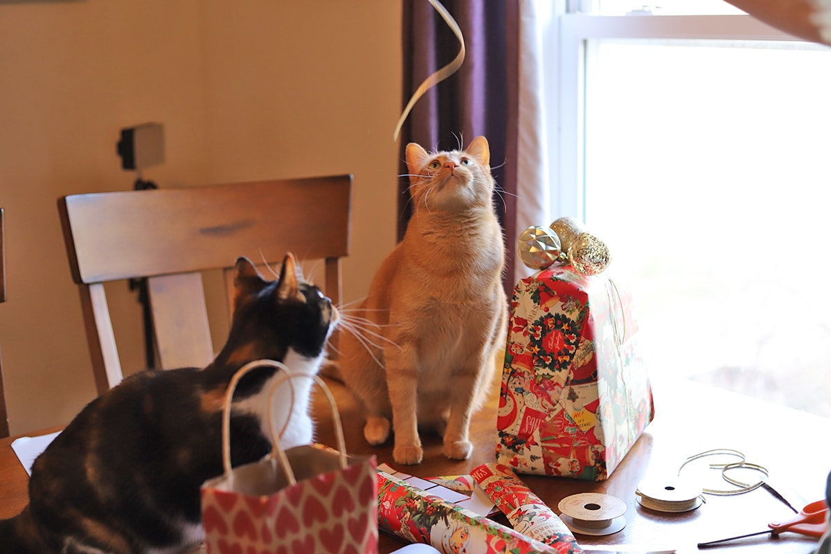 Avon and Cally playing with ribbon while presents are being wrapped.