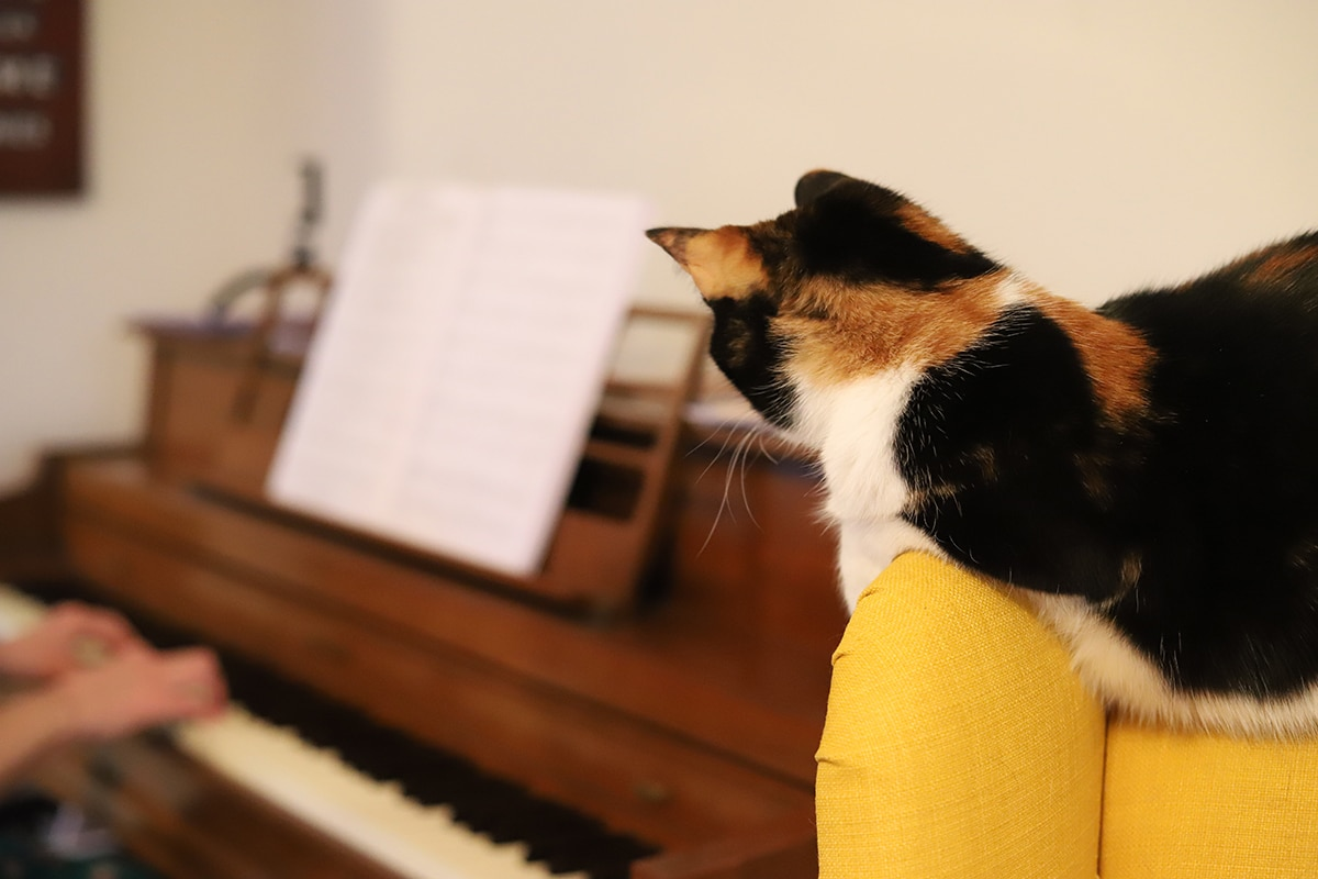 Cally the cat watching while Cadry plays piano.